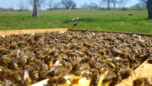 Bienenbeute einer Bienenpatenschaft