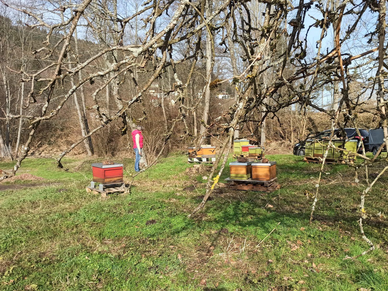 Bienenstand im Schwarzwald - Bad Wildbad