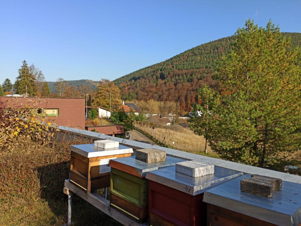 Standplatz Bienen BFW Bad Wildbad